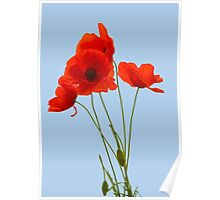 Delicate Red Poppies Vector Poster