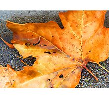 Golden Leaf Photographic Print