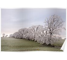 Frosted Treeline  Poster