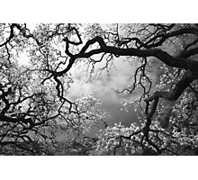 Sheltering Sky Photographic Print