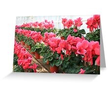 Rows and Rows of Flowers Greeting Card