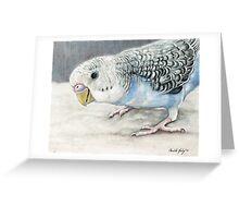 Blue Budgie Parakeet Greeting Card