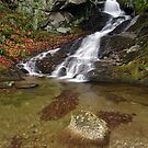 Small Mountain Stream - Vermont  by Stephen Beattie