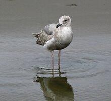 Baby Gull by art2plunder