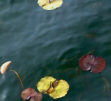 Water Lily leaves by Christina Backus