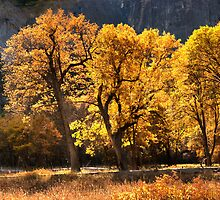Autumn Black Oaks by Floyd Hopper