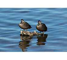 Ducks on the Rocks Photographic Print
