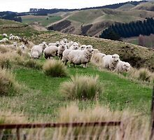 an exciting New Zealand landscape by beautifulscenes