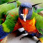 Loving the Lorikeets 2 by Kathryn Johnston