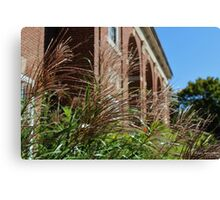 Ornamental Grass and a Building Canvas Print