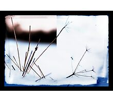 Winter diptych Photographic Print