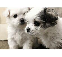 Cute Puppy Portrait Photographic Print