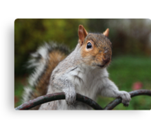 Got Any Nuts? Canvas Print