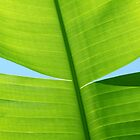 Tropical Frond by ShotsOfLove