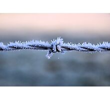 Sharp Frost Photographic Print