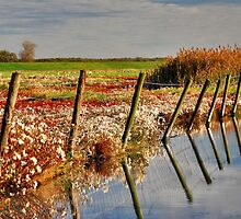 Wetlands by Adri  Padmos