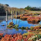Wetlands 3 by Adri  Padmos