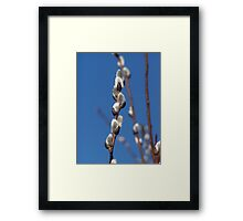 """Pussy Willow"" Framed Print"