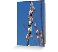 """""""Pussy Willow"""" Greeting Card"""