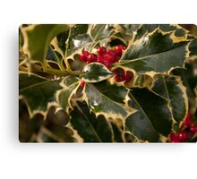 Holly and Berries Canvas Print