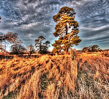 Fence line, Collector. by Ian Ramsay