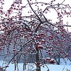 Frozen Cherry Berries by HELUA