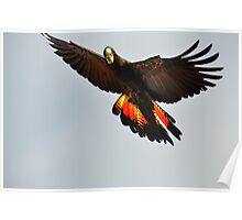 Black Cockatoo Poster