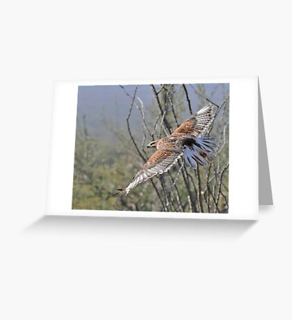 The Glider Greeting Card