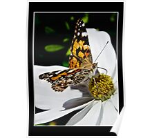 Red Admiral 2 Poster