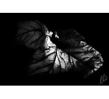 Old Leaf Photographic Print