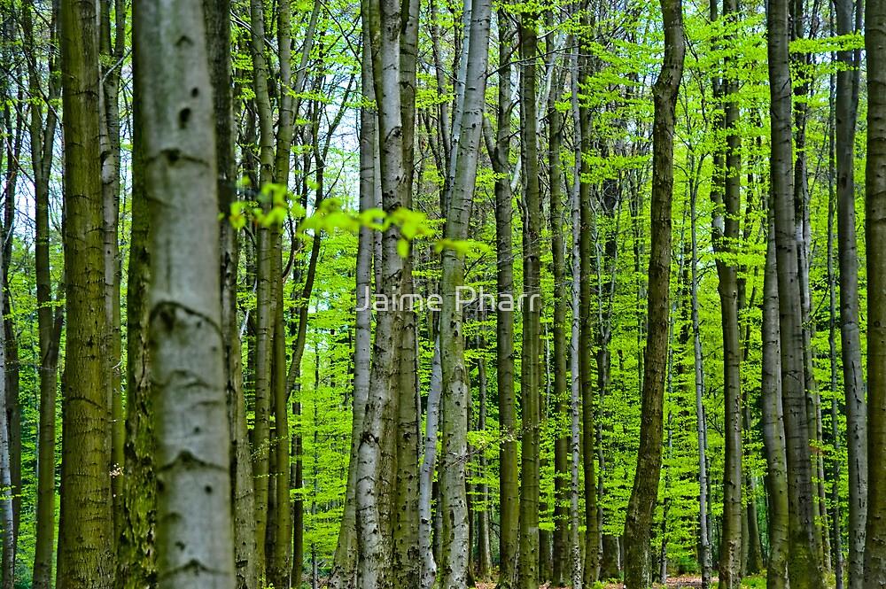 Tree trunks by Jaime Pharr