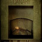 Champion Canary by Alicia Adamopoulos