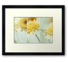 Flower Arrangement - Marguerite Daisies Framed Print