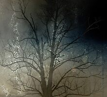 Tree by Sascha Cameron
