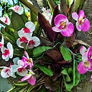 Orchid Party on the Palm by GolemAura