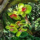 Living Green Silk by GolemAura