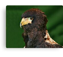 Bateleur Eagle 2 Canvas Print