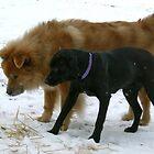 HARLEY AND ROSIE by mlynnd