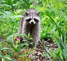 Rainy Day Raccoon by Jean Gregory  Evans