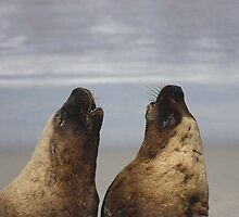 Seal conversation - Kangaroo Island, South Australia by Carissa Hubrechsen