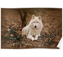 Wolf in Winter Poster