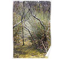 Flinders Chase bush wilderness - Kangaroo Island, South Australia Poster