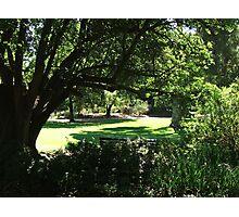 Botanic Gardens 4 Photographic Print