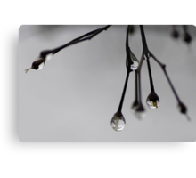 Raindrops in December Canvas Print