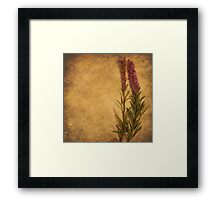 Grains of Sand (without words)  Framed Print