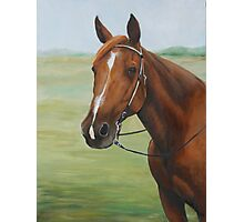 Quarter Horse Portrait Photographic Print