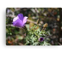 wild hibiscus 2, Fitzgerald River NP, WA Canvas Print