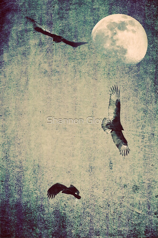 Vultures and the Moon by Shannon Holm