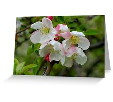 Little Blossoms Greeting Card