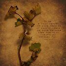 Pine by Tia Allor-Bailey